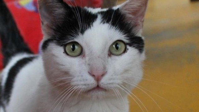 კატამ პატრონისგან 1,5 მილიონი ევრო მემკვიდრეობით მიიღო