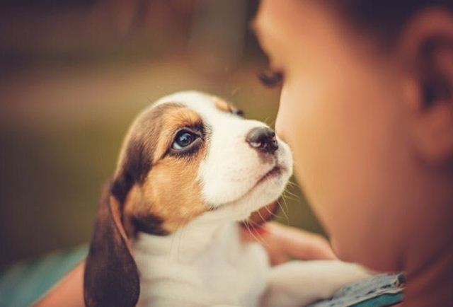 ძაღლს შეუძლია იწინასწარმეტყველოს პატრონის ქმედება