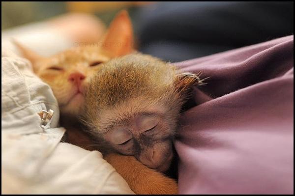 მაიმუნი მარლი ველურ ბუნებაში დაბრუნდა (+ვიდეო)