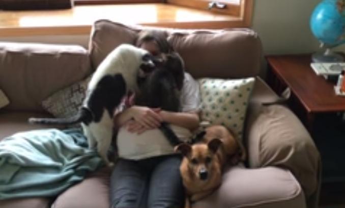კატებისა და ძაღლის რეაქცია ფეხმძიმე პატრონზე (+ვიდეო)