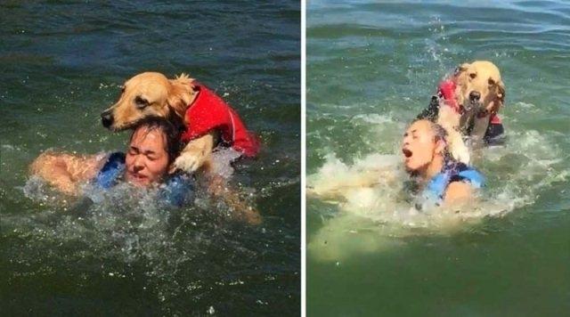 აი, რატომ არ უნდა ჩახვიდეთ წყალში საცურაოდ ძაღლთან ერთად: გოგონა ოთხფეხა მეგობართან ერთად ტბაზე დასვენების ფოტოებს სოციალურ ქსელში აქვეყნებს