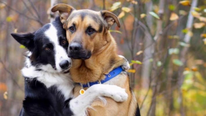 როგორი რეაქცია აქვს ძაღლს, როდესაც ეკითხებიან, ვინ არის მისი საუკეთესო მეგობარი... (+ვიდეო)