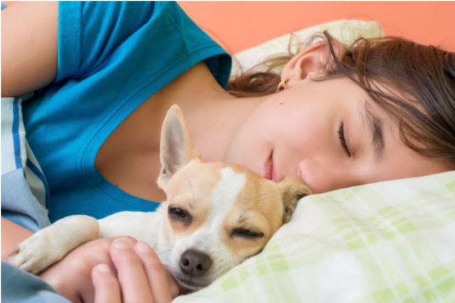 ქალები უკეთ იძინებენ ძაღლების გვერდით, ვიდრე კატებთან