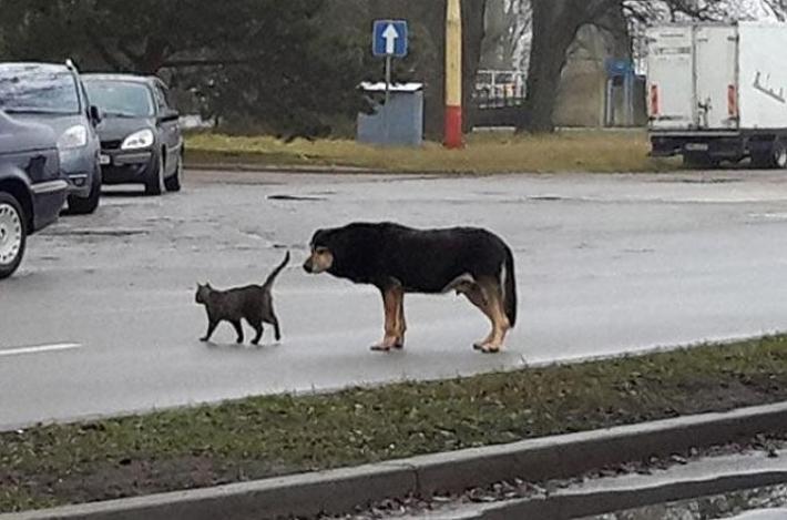 მეგობარ კატასთან განშორების შემდეგ ძაღლს დეპრესია დაეწყო