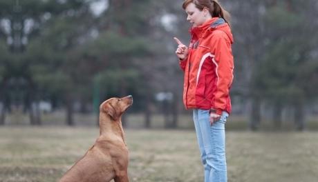 """სპეციალისტები: """"ძაღლები სიტყვიერ ბრძანებაზე მეტად ჟესტებზე რეაგირებენ"""""""