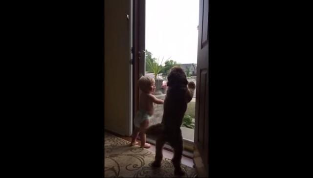 ბავშვი და ძაღლი ერთნაირად გამოხატავენ სიხარულს, როცა მამა სახლში ბრუნდება(+ვიდეო)