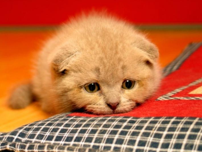 რატომ კნავის თქვენი კატა?
