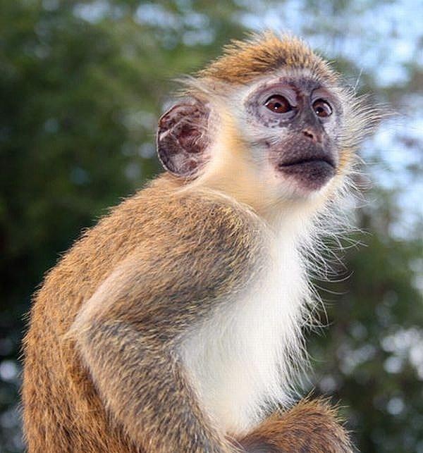 მაიმუნებმა ბავშვი გადაარჩინეს