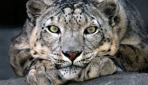 საინტერესო ფაქტები ცხოველებზე, ისინი განწყობას გაგიუმჯობესებთ
