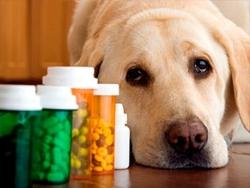 """""""ეს შინაური ცხოველების სიკვდილიანობას გაზრდის"""" - წამლების შესახებ კანონში ცვლილებების ვეტერინარული საფრთხე"""