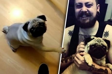 """დააპატიმრეს მამაკაცი, რომელმაც საკუთარ ძაღლს ჰიტლერის """"სალამი"""" ასწავლა"""