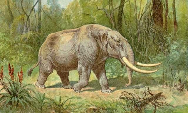 აიოვას შტატში მოზარდმა იპოვა მასტოდონტის ყბის ძვალი, რომლის ასაკიც დაახლოებით 34 ათასი წელია