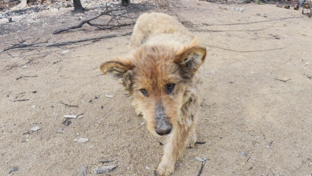 უპატრონო ძაღლმა გადაარჩინა გოგონა, რომელსაც მანქანამ დაარტყა. მძღოლმა ის ტყეში გადააგდო