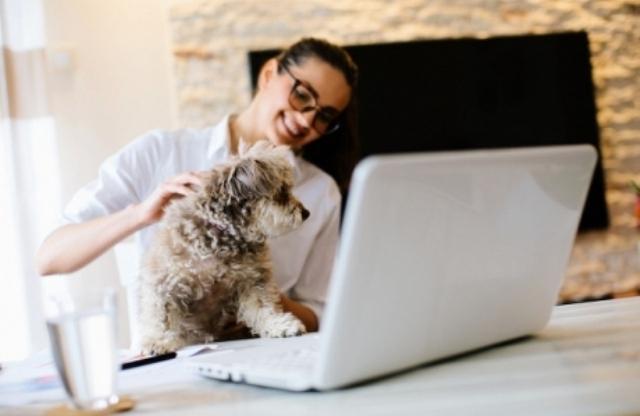 თანამშრომლების სტრესის დასაძლევად, კომპანიები თერაპევტ ძაღლებს ქირაობენ