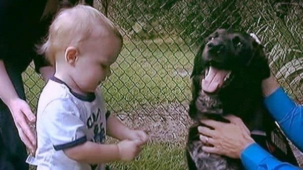 """სასტიკი ძიძა ძაღლმა ამხილა: """"ბავშვს ნამდვილ ურჩხულთან ვტოვებდით"""" (+ვიდეო)"""