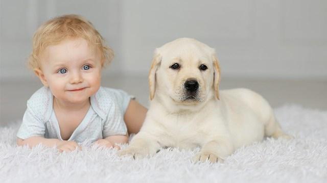 რატომ უნდა ჰყავდეს ყველა ბავშვს ძაღლი?