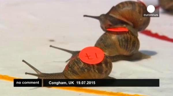ყველაზე სწრაფები მსოფლიოში - ინგლისში ლოკოკინების შეჯიბრი ჩატარდა (+ვიდეო)