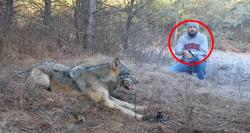 მონადირემ დაინახა, თუ როგორ მოყვა მგელი მახეში... იმას, რაც მან შემდეგ გააკეთა, ბევრი ვერ გაბედავდა (+ვიდეო)