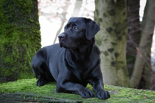 ძაღლის 7 ჯიში, რომლებიც განსაკუთრებულ ყურადღებას ითხოვენ