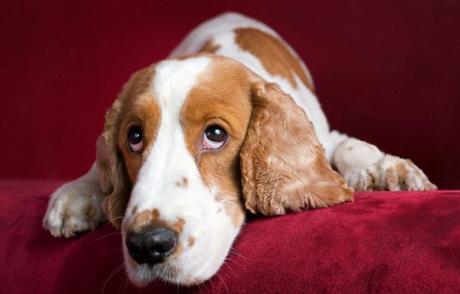 მსოფლიოში ყოველი მეოთხე ძაღლი დეპრესიით იტანჯება
