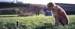 ყველა ძაღლს სჭირდება პატრონი - საოცრად მგრძნობიარე ვიდეორგოლი (+ვიდეო)