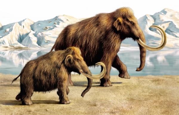 არქტიკაში აღმოაჩინეს მამონტის ნაწილები, რომლებიც მათი სახეობის აღდგენის (კლონირების) საშუალებას იძლევა
