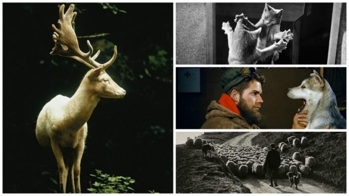 National Geographic-ის არქივიდან ფოტოები, რომლებიც ამ დრომდე არავის უნახავს!