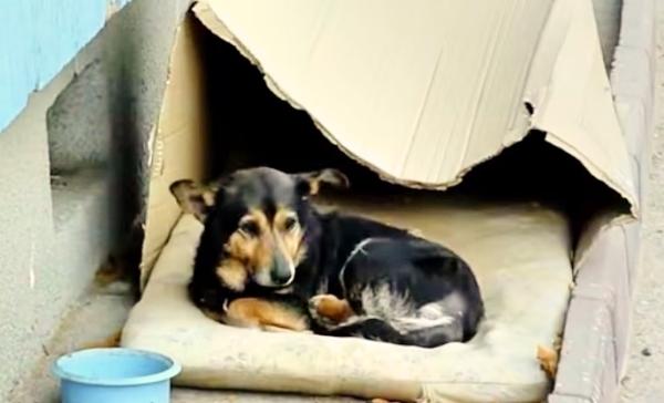 ძაღლი, რომელიც მუყაოს ყუთში ცხოვრობდა (+ვიდეო)