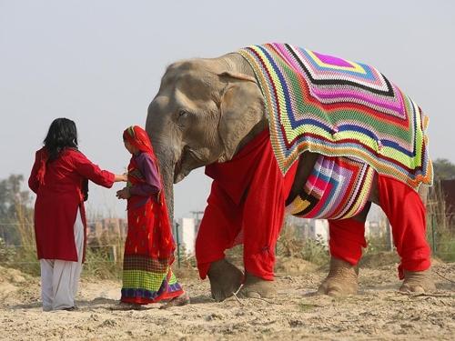 ინდურ სპილოებს თბილი სვიტერები მოუქსოვეს, რომ ყინვაში არ გაცივდნენ
