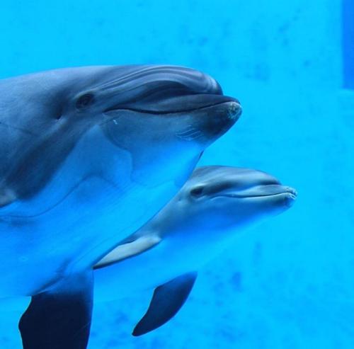 მომვლელები გაოცებულნი იყვნენ, როდესაც დელფინმა საკუთარი შვილი მოკლა, მაგრამ ამას თავისი მიზეზი ჰქონდა