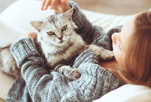 დააკვირდით კატას - განიცდით თუ არა მის მიმართ უარყოფით დამოკიდებულებას?