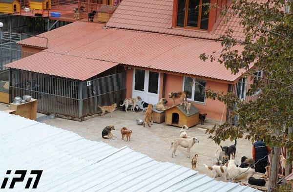 ცხოველთა დაცვის ფედერაცია - თავშესაფრის არარსებობა ცხოველთა დაცვის კუთხით, უმნიშვნელოვანეს პრობლემას წარმოადგენს