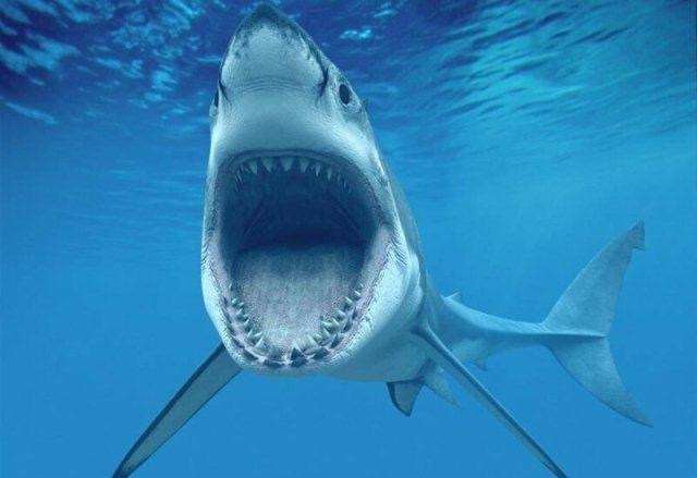 5 გავრცელებული მითი ზვიგენების შესახებ