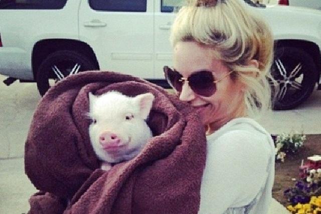 """""""მინი-პიგი ვიყიდე, მაგრამ 3 წელიწადში ის ასი კილო ღორი გახდა..."""""""