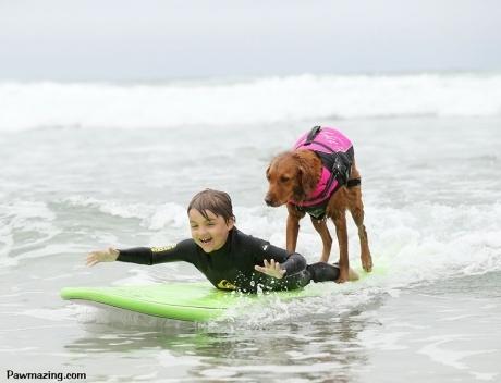 ეს ძაღლი შეზღუდული შესაძლებლობების ადამიანებს ოცნების ასრულებაში ეხმარება
