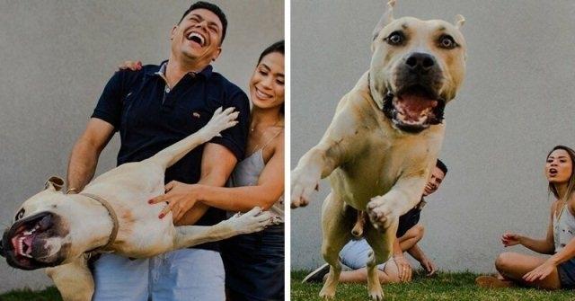 """""""ის მშვიდია და კარგად მოიქცევა"""" - წყვილმა ძაღლი საქორწილო ფოტოსესიაზე წაიყვანა"""