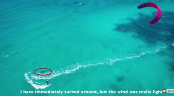 ორმეტრიანმა ზვიგენმა სერფერის დაფის ქვეშ ჩაყვინთა. ქალმა მხოლოდ მაშინ გააცნობიერა ის საშიშროება, რაც მის სიცოცხლეს ემუქრებოდა და გაქცევა სცადა... (+ვიდეო)