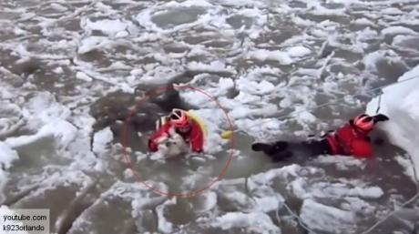 ლაბრადორი მაშველებმა გაყინული მდინარიდან ამოიყვანეს (+ვიდეო)