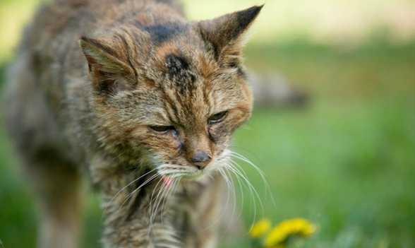 მსოფლიოში ყველაზე ხნიერი კატა გარდაიცვალა