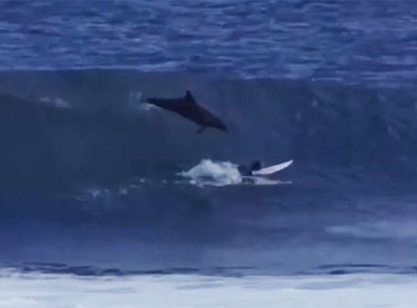 ტალღებზე ცურვისას მოულოდნელად სერფერს დელფინი თავზე გადაევლო (+ვიდეო)