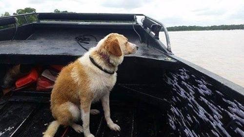 წყალდიდობის დროს ეს ძაღლი პატრონებმა ბოძზე მიბმული მიატოვეს