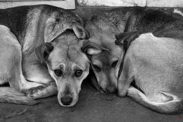 დიდი ბრიტანეთის ხელისუფლება ცხოველების მიმართ სასტიკი მოპყრობის ფაქტზე სასჯელს ამკაცრებს