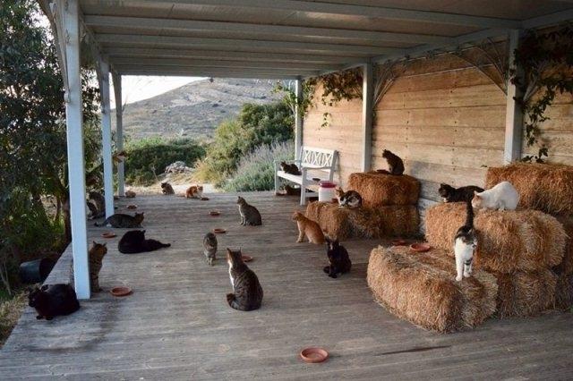 ფისომოყვარულების საყვარელი სამსახური საბერძნეთის ულამაზეს კუნძულზე, სადაც 55 კატა ცხოვრობს