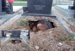 ეს ძაღლი პატრონის სიკვდილის შემდეგაც მისი ერთგული დარჩა..