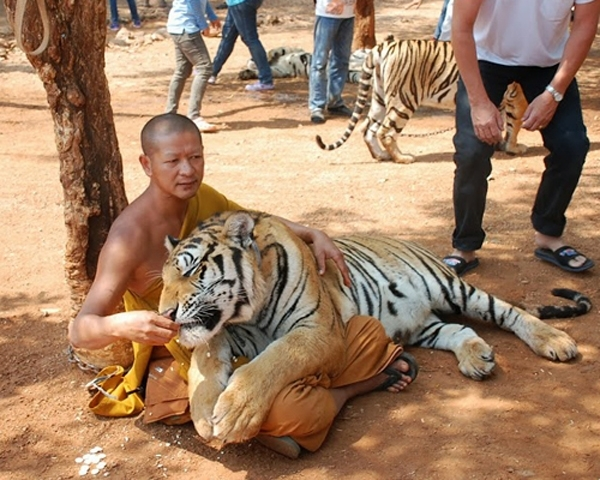 ტაძარი, რომელშიც ცხოველები და ადამიანები ერთად ცხოვრობენ