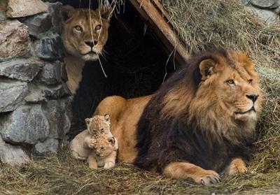 ცხოველები და მათი ოჯახები (+ფოტო)