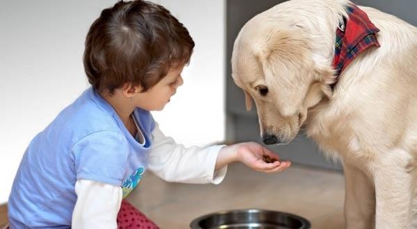 რატომ ამბობს უარს საკვებზე ძაღლი?