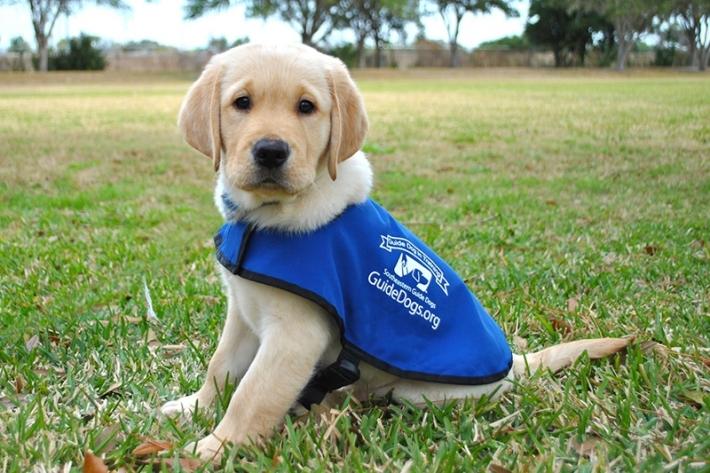 ძაღლების შესახებ 8 მითი, რომლებისაც შინაური ცხოველთა პატრონების უმეტესობას სჯერა