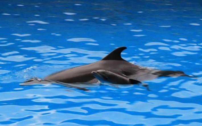 ბათუმის დელფინარიუმში შოუს მსვლელობისას დელფინი დაიბადა
