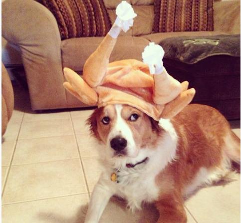 25 ძაღლის სახალისო ფოტო, რომლებიც მადლიერების დღეს ინდაურის კოსტუმში გამოაწყვეს